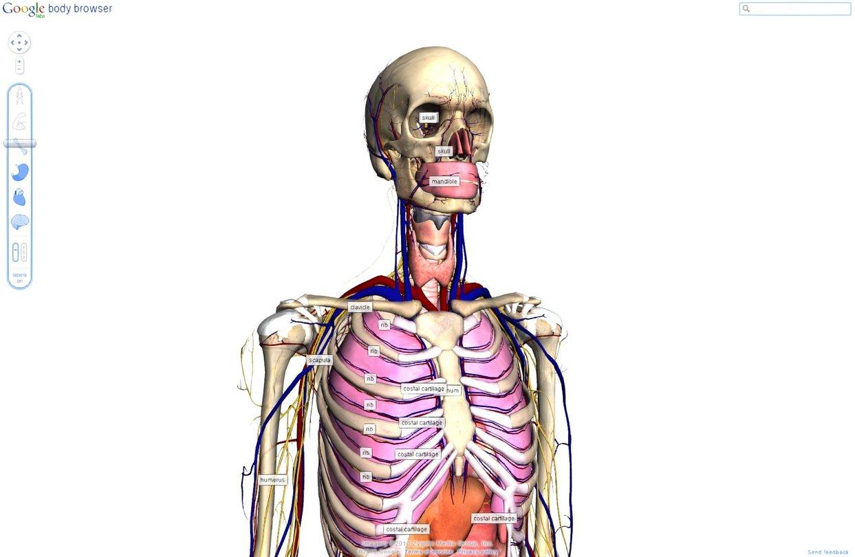 Google Body Browser - Anatomie in 3D-Grafik mit WebGL - GameStar