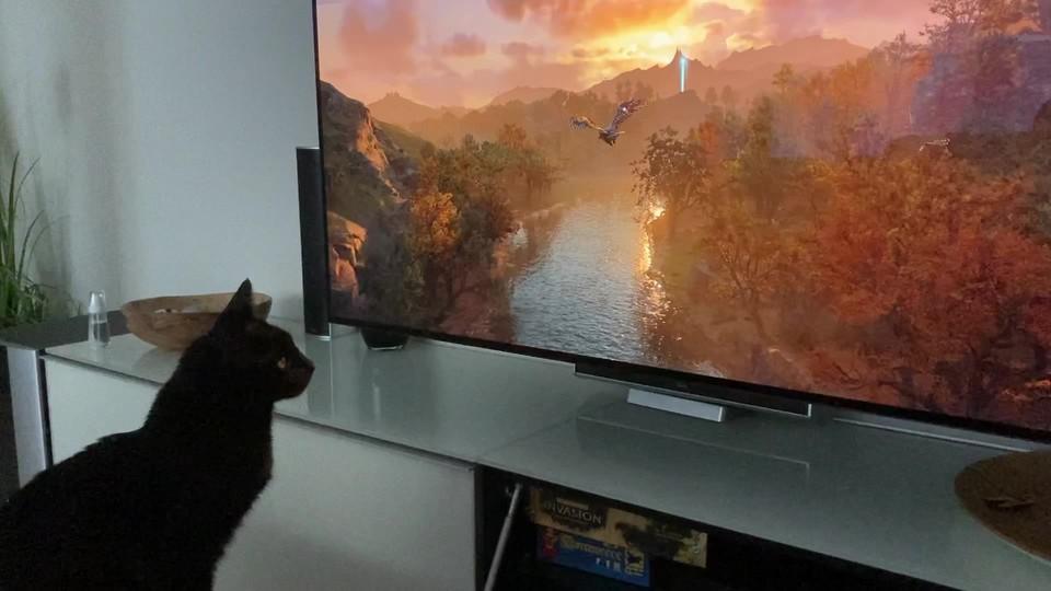 Video: Es ist alles eine Frage der Perspektive - Heikos Katze Henry findet Valhalla großartig!